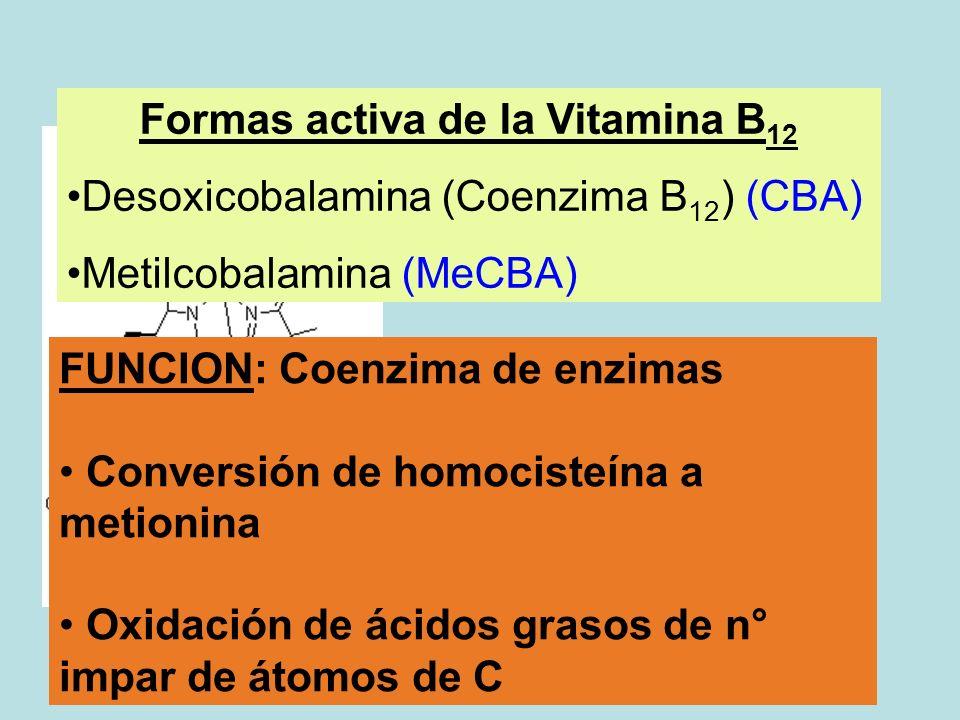 Formas activa de la Vitamina B12