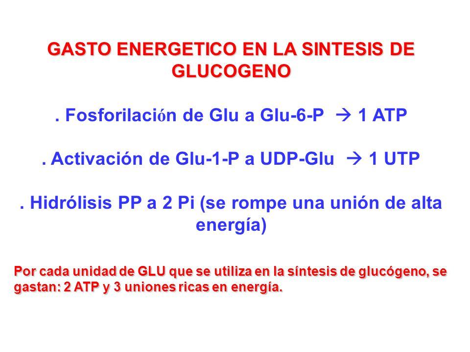 GASTO ENERGETICO EN LA SINTESIS DE GLUCOGENO