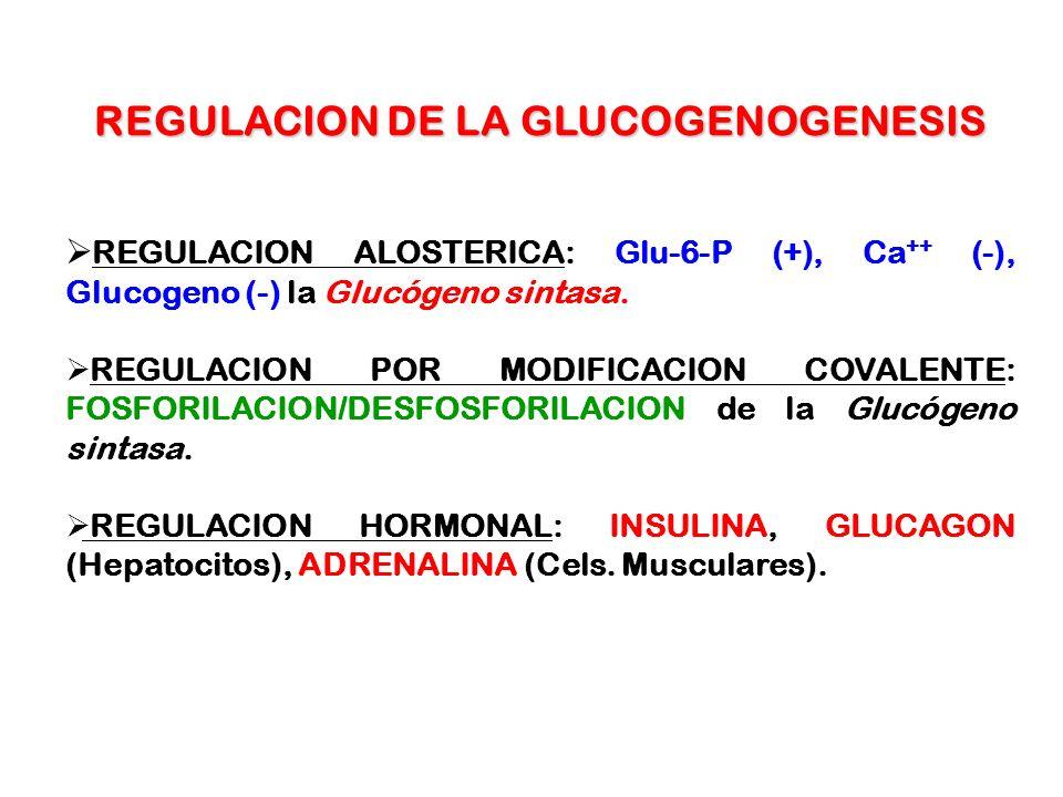 REGULACION DE LA GLUCOGENOGENESIS