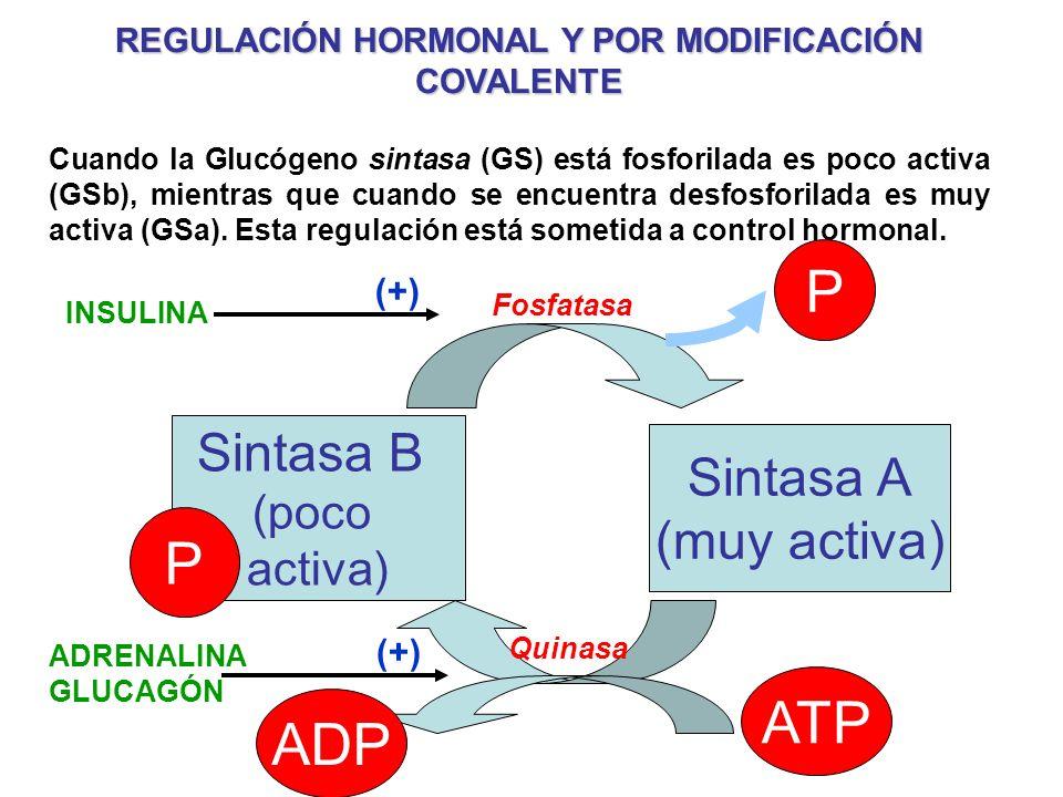 REGULACIÓN HORMONAL Y POR MODIFICACIÓN COVALENTE