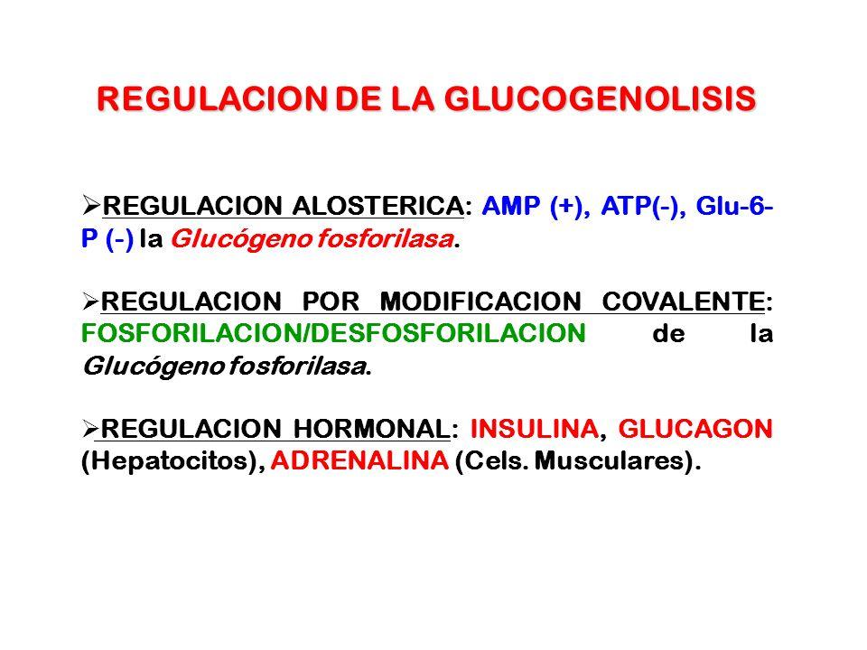 REGULACION DE LA GLUCOGENOLISIS