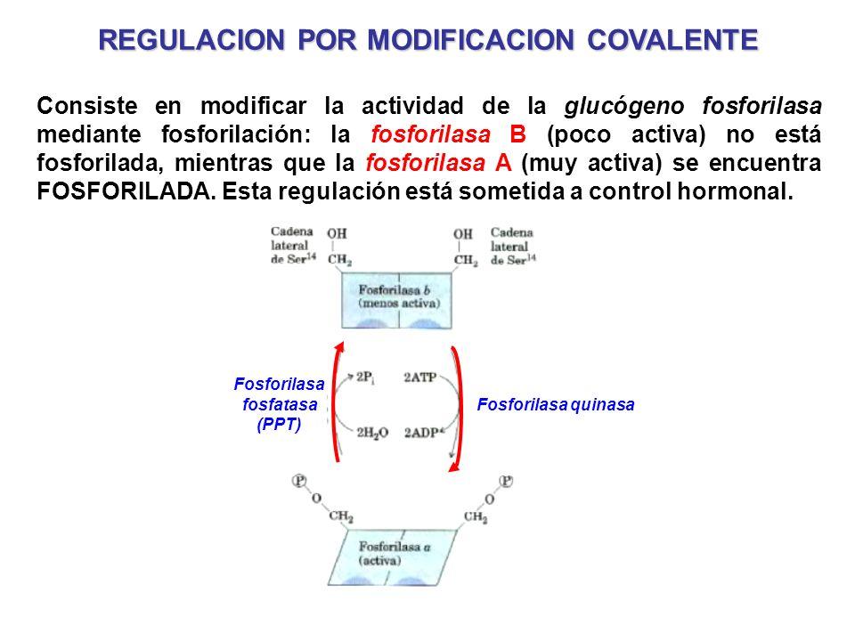 REGULACION POR MODIFICACION COVALENTE