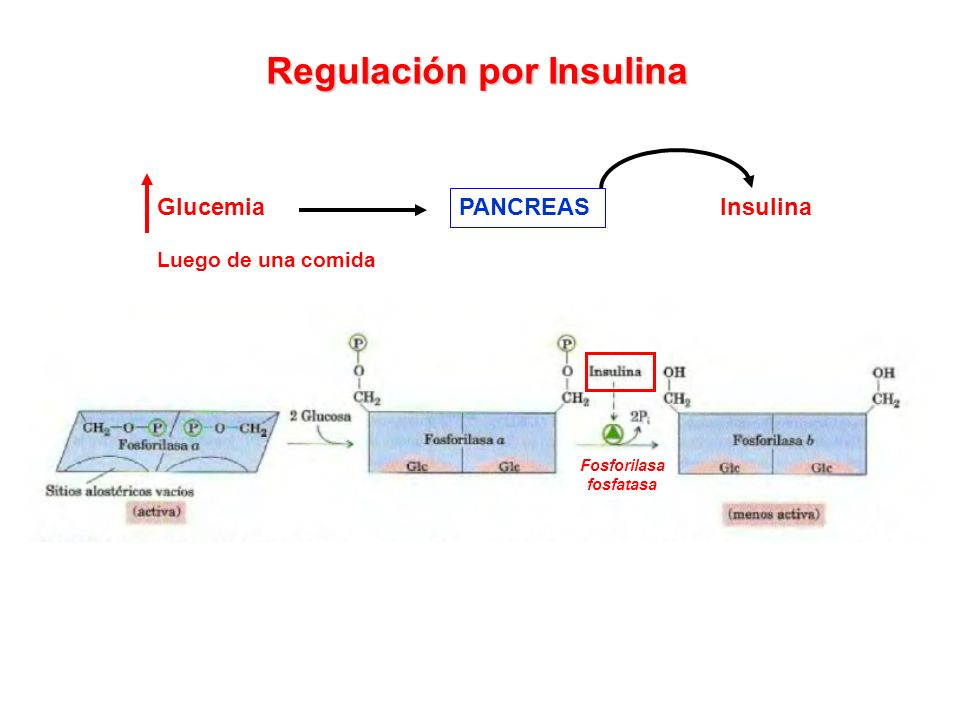 Regulación por Insulina
