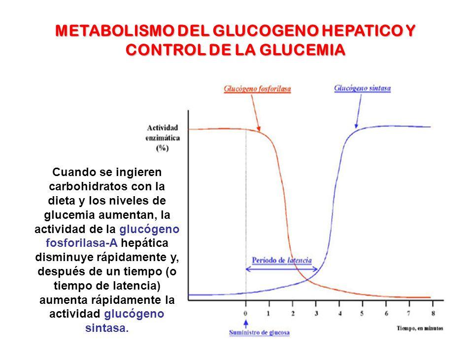 METABOLISMO DEL GLUCOGENO HEPATICO Y CONTROL DE LA GLUCEMIA
