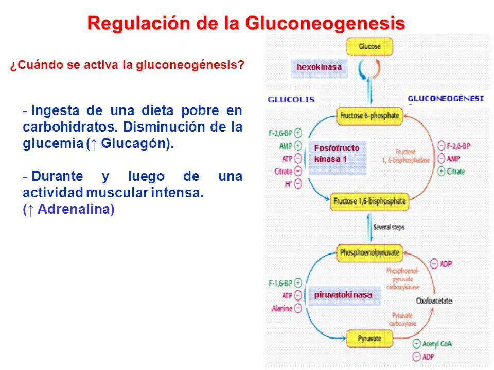 Regulación de la Gluconeogenesis