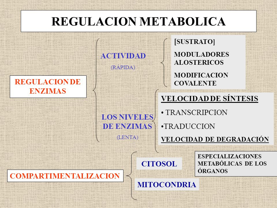 REGULACION METABOLICA