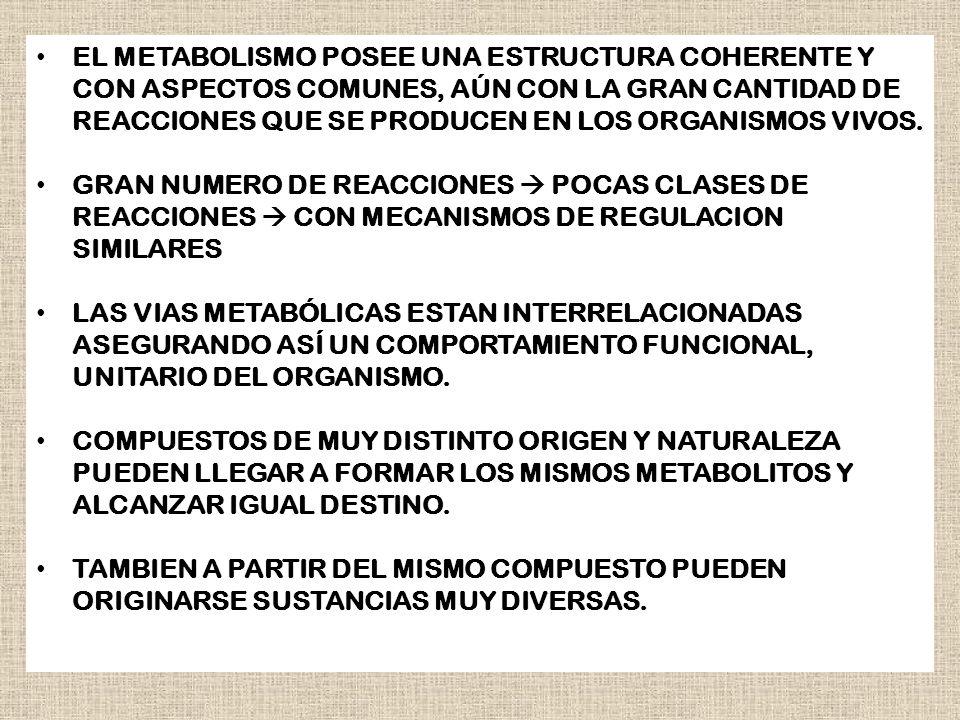 EL METABOLISMO POSEE UNA ESTRUCTURA COHERENTE Y CON ASPECTOS COMUNES, AÚN CON LA GRAN CANTIDAD DE REACCIONES QUE SE PRODUCEN EN LOS ORGANISMOS VIVOS.