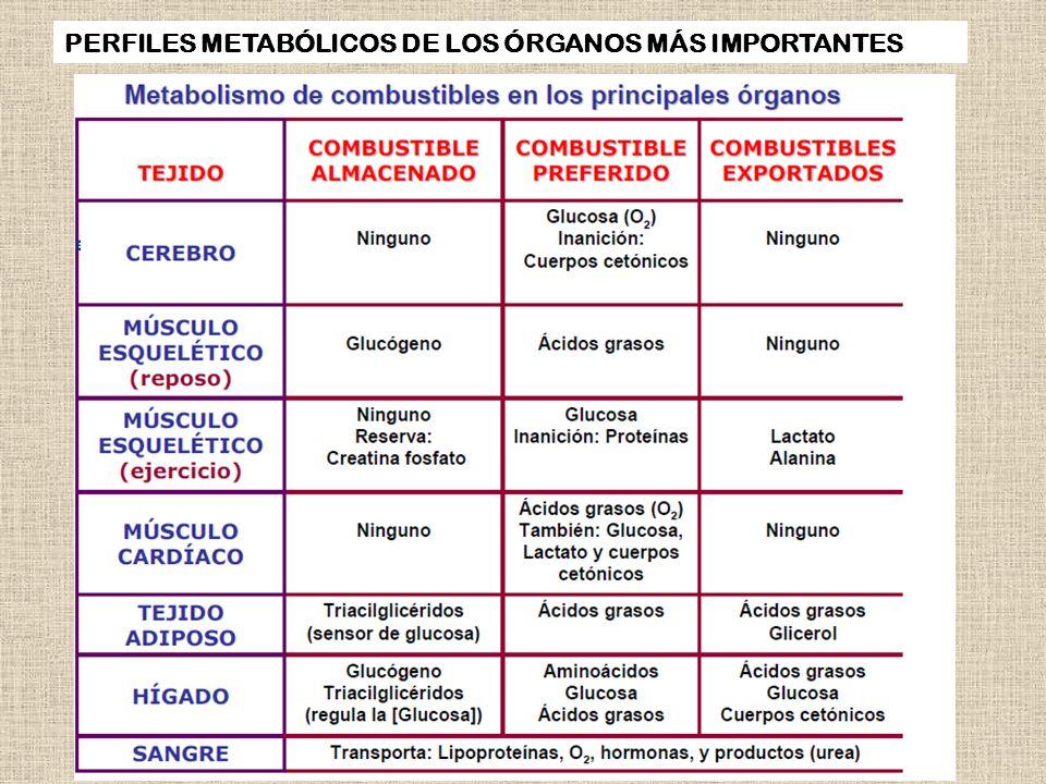 PERFILES METABÓLICOS DE LOS ÓRGANOS MÁS IMPORTANTES