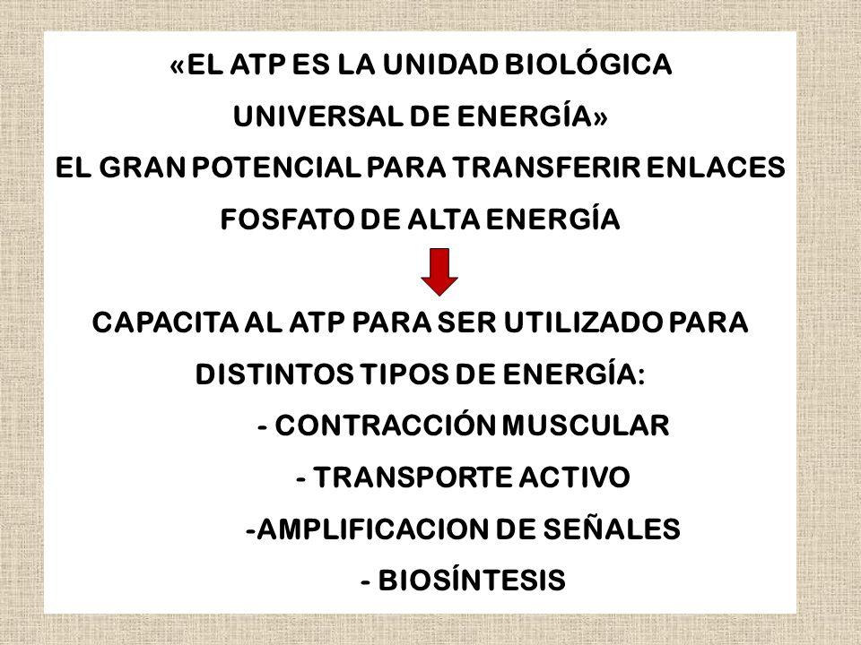 «EL ATP ES LA UNIDAD BIOLÓGICA UNIVERSAL DE ENERGÍA»