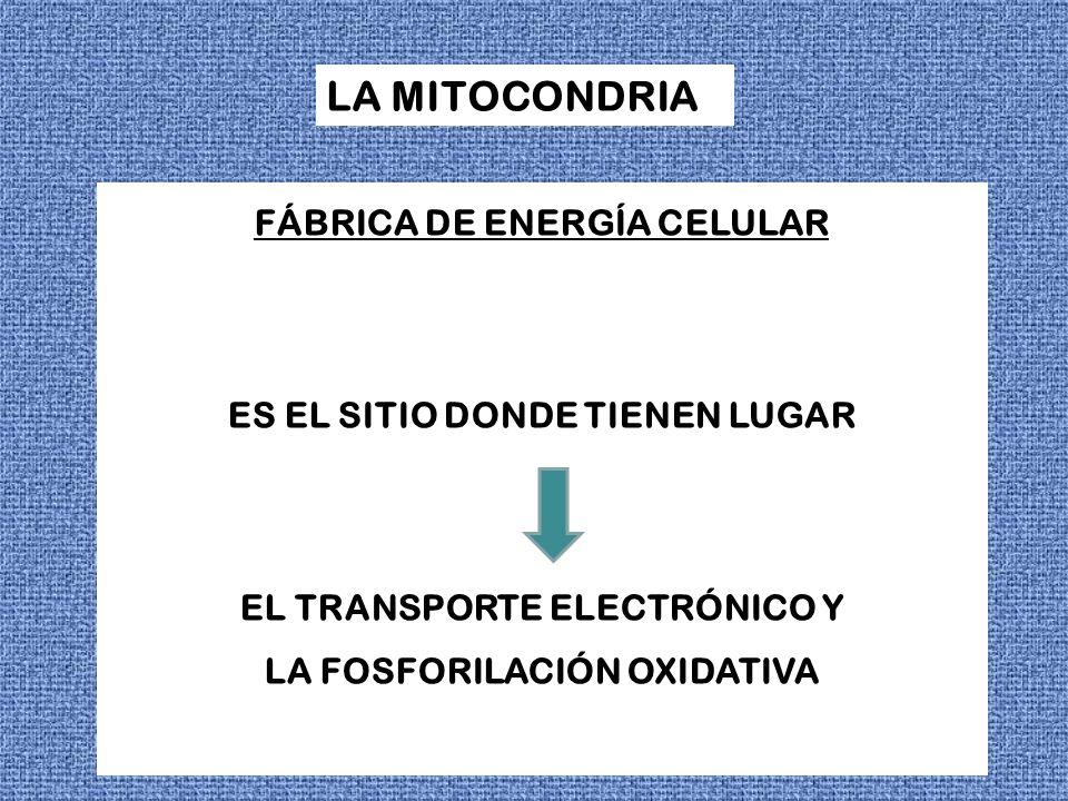 FÁBRICA DE ENERGÍA CELULAR ES EL SITIO DONDE TIENEN LUGAR