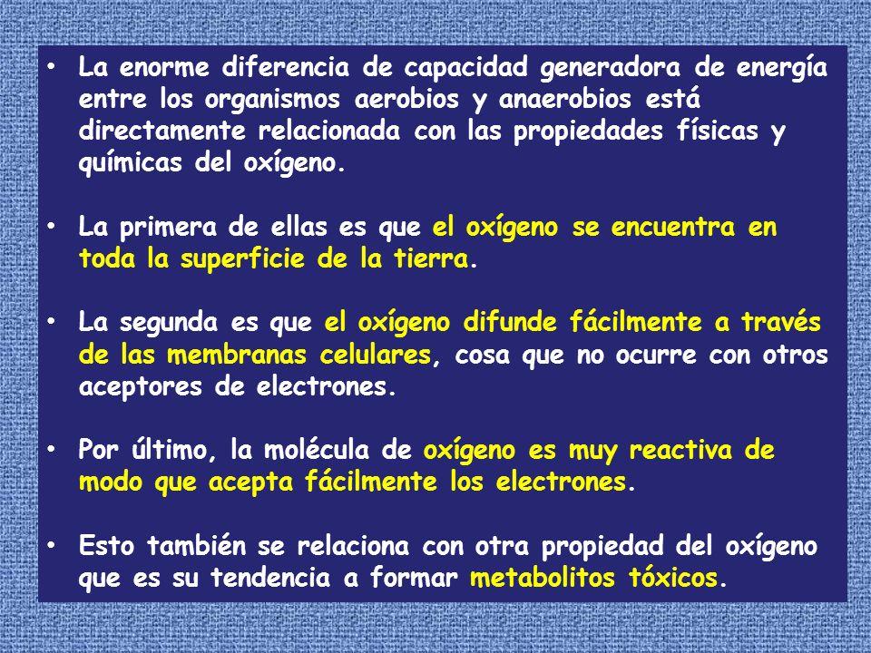La enorme diferencia de capacidad generadora de energía entre los organismos aerobios y anaerobios está directamente relacionada con las propiedades físicas y químicas del oxígeno.
