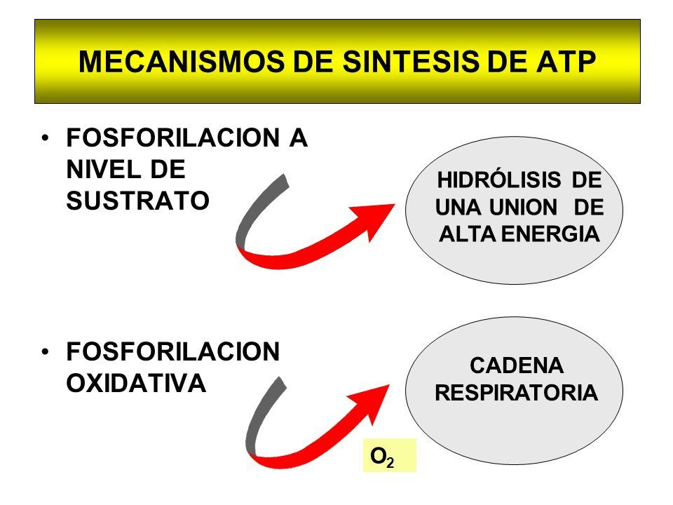 MECANISMOS DE SINTESIS DE ATP