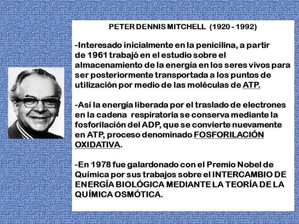 PETER DENNIS MITCHELL (1920 - 1992)