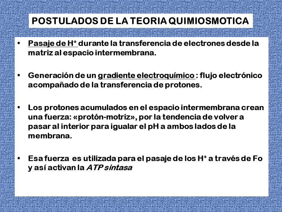 POSTULADOS DE LA TEORIA QUIMIOSMOTICA