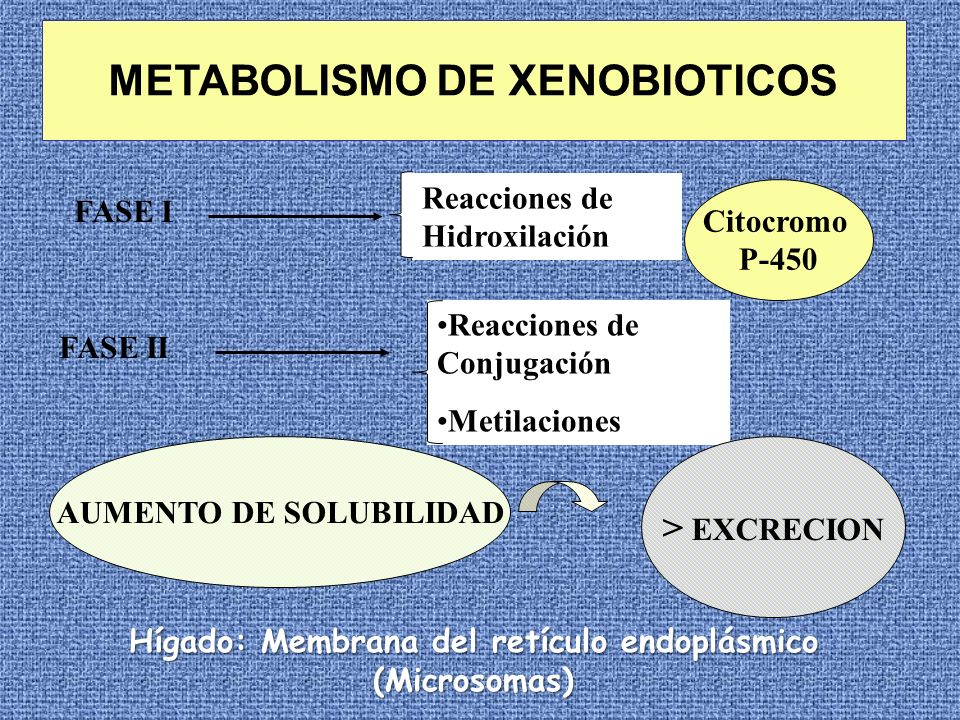 METABOLISMO DE XENOBIOTICOS
