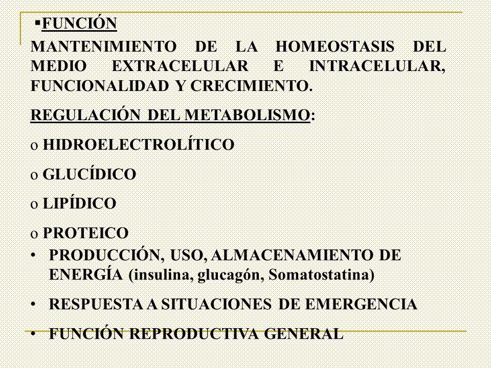 FUNCIÓN MANTENIMIENTO DE LA HOMEOSTASIS DEL MEDIO EXTRACELULAR E INTRACELULAR, FUNCIONALIDAD Y CRECIMIENTO.