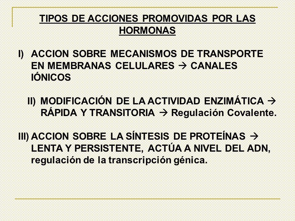 TIPOS DE ACCIONES PROMOVIDAS POR LAS HORMONAS