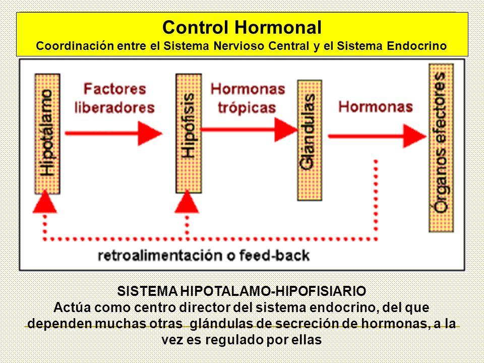 Control Hormonal SISTEMA HIPOTALAMO-HIPOFISIARIO