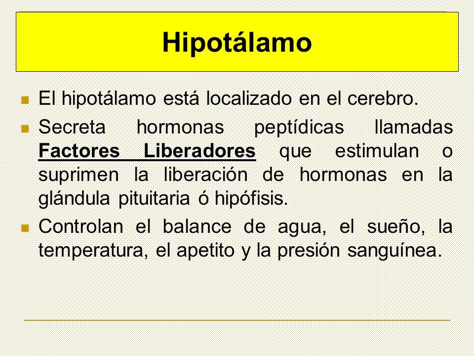 Hipotálamo El hipotálamo está localizado en el cerebro.