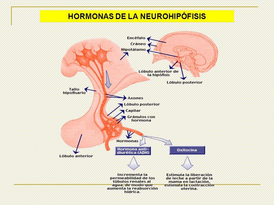 HORMONAS DE LA NEUROHIPÓFISIS
