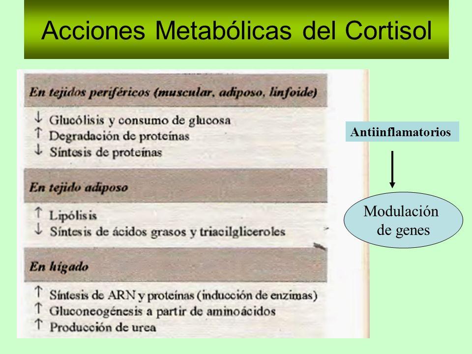 Acciones Metabólicas del Cortisol