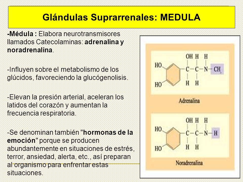 Glándulas Suprarrenales: MEDULA