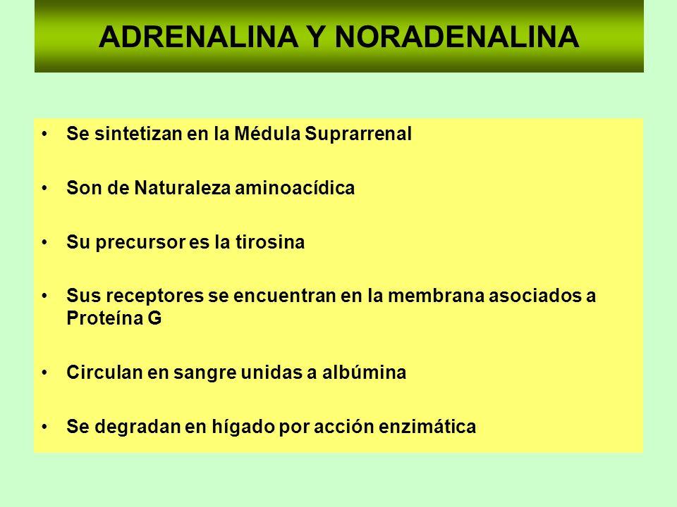 ADRENALINA Y NORADENALINA