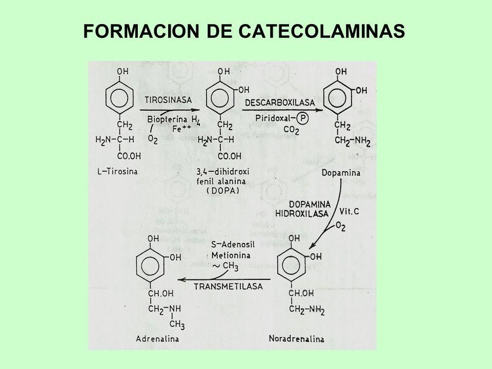 FORMACION DE CATECOLAMINAS