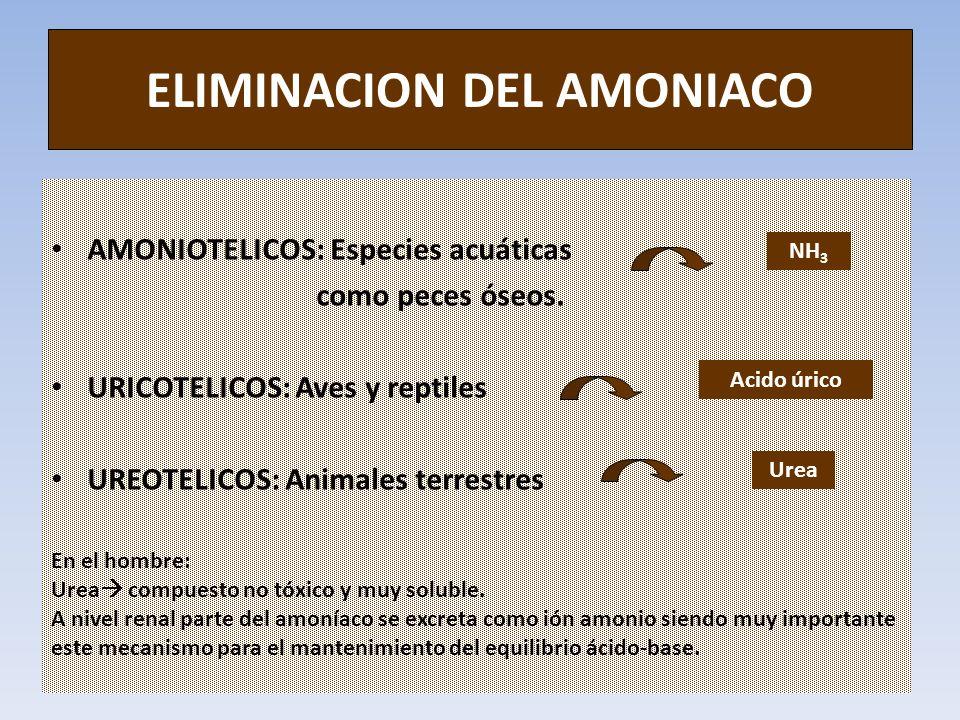 ELIMINACION DEL AMONIACO