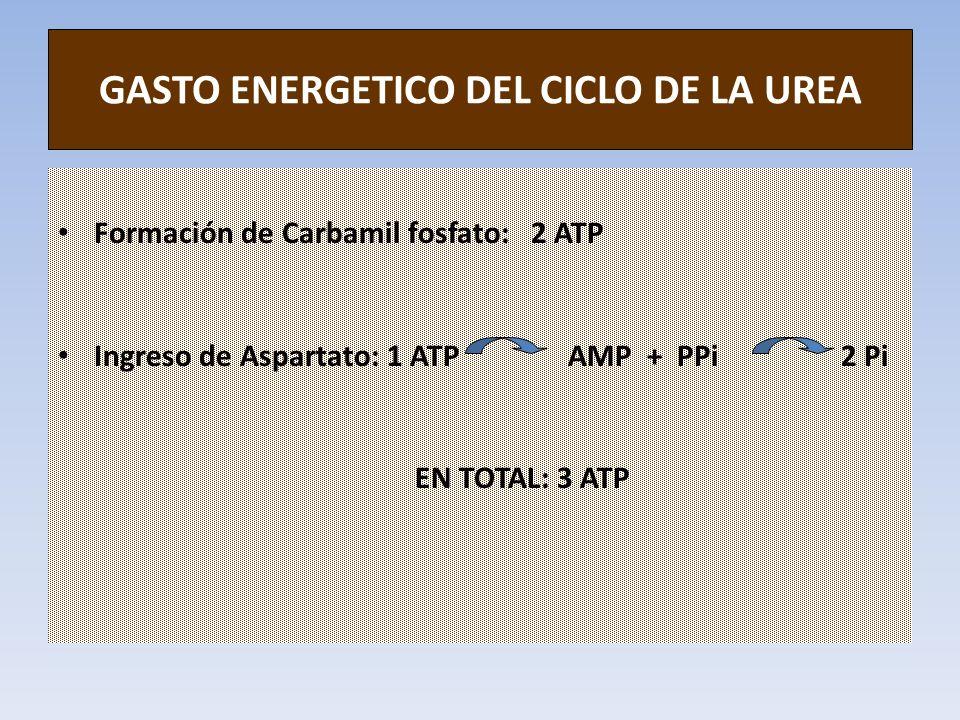 GASTO ENERGETICO DEL CICLO DE LA UREA