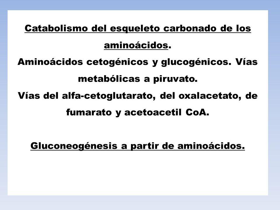 Catabolismo del esqueleto carbonado de los aminoácidos