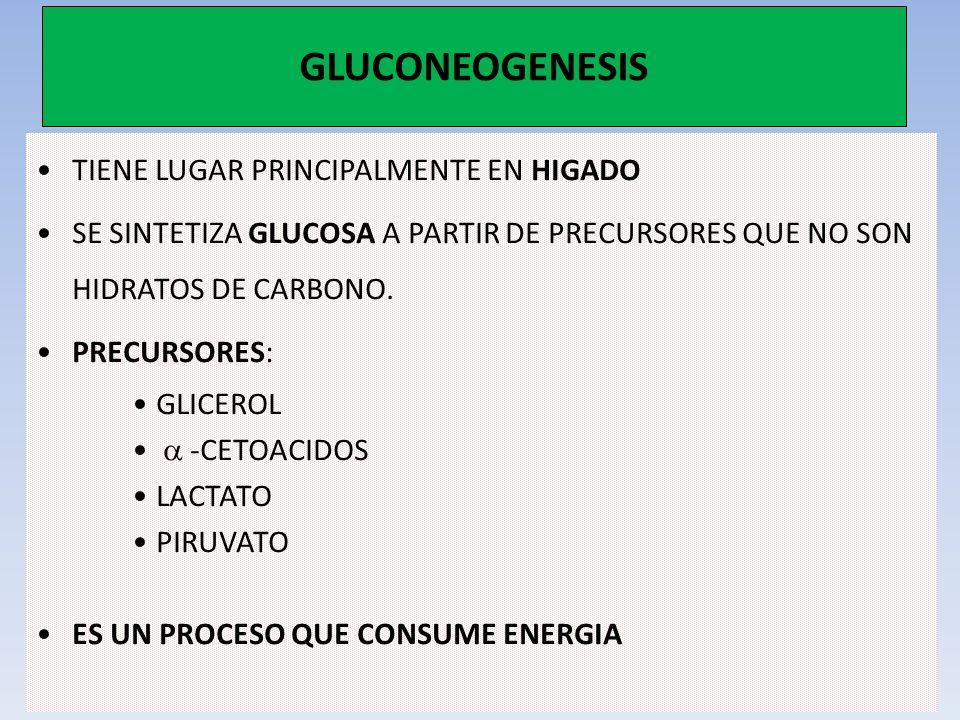 GLUCONEOGENESIS TIENE LUGAR PRINCIPALMENTE EN HIGADO