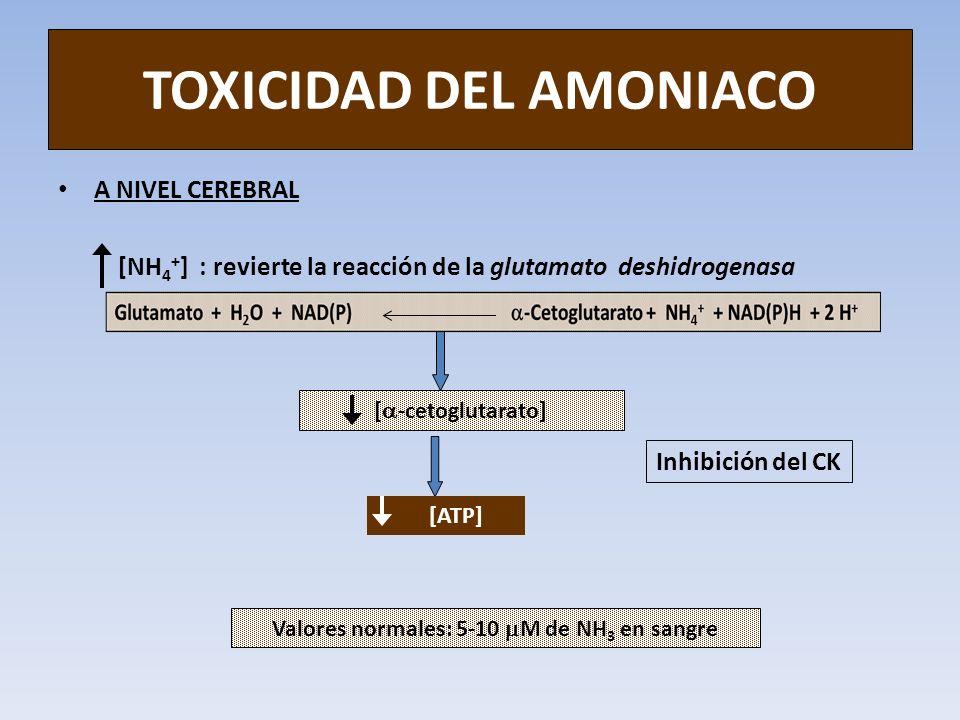 TOXICIDAD DEL AMONIACO