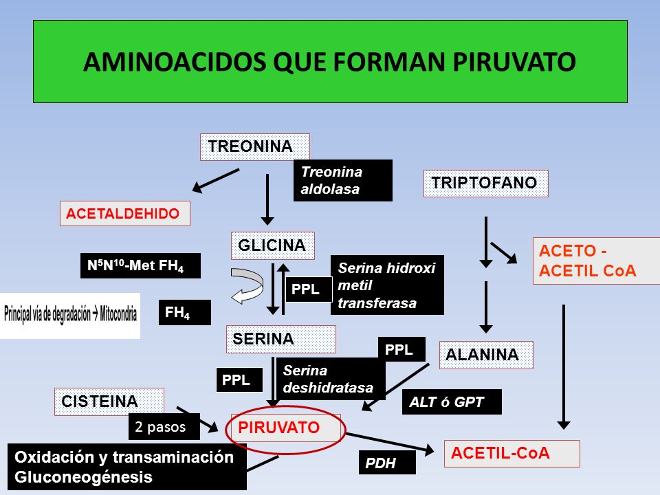 AMINOACIDOS QUE FORMAN PIRUVATO