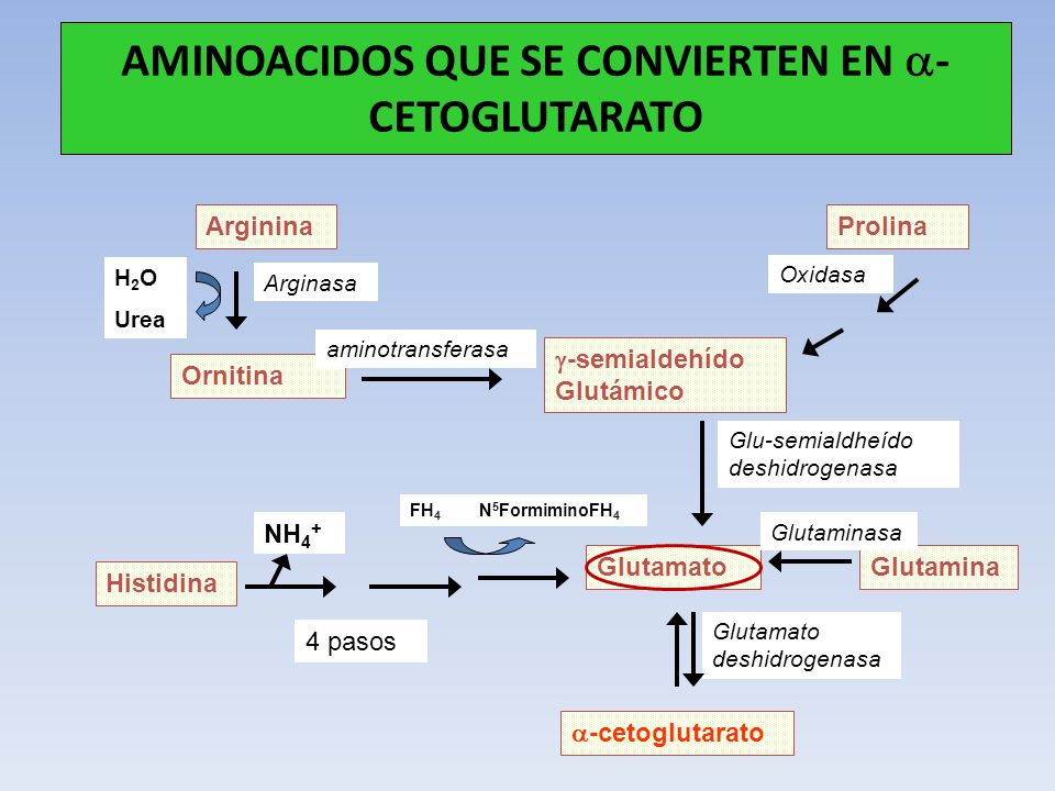 AMINOACIDOS QUE SE CONVIERTEN EN a-CETOGLUTARATO