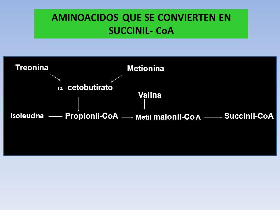 AMINOACIDOS QUE SE CONVIERTEN EN SUCCINIL- CoA