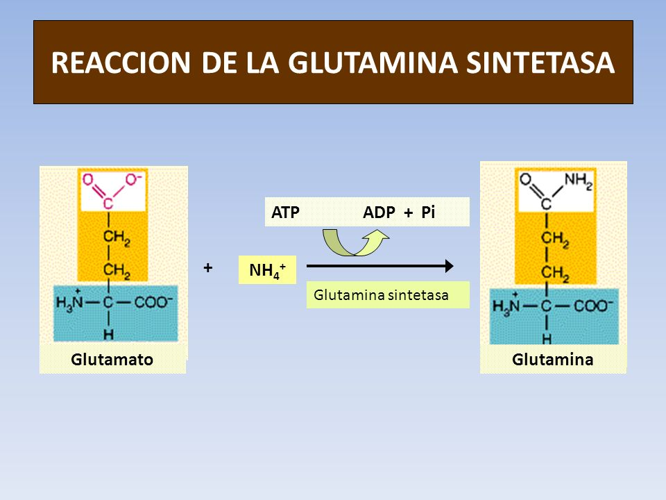 REACCION DE LA GLUTAMINA SINTETASA
