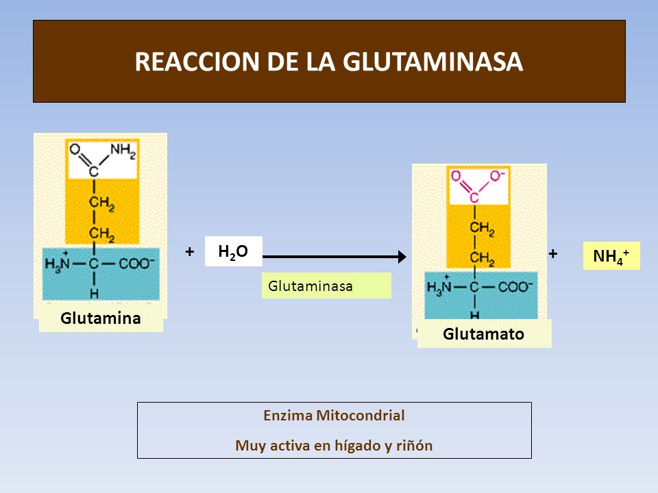 REACCION DE LA GLUTAMINASA