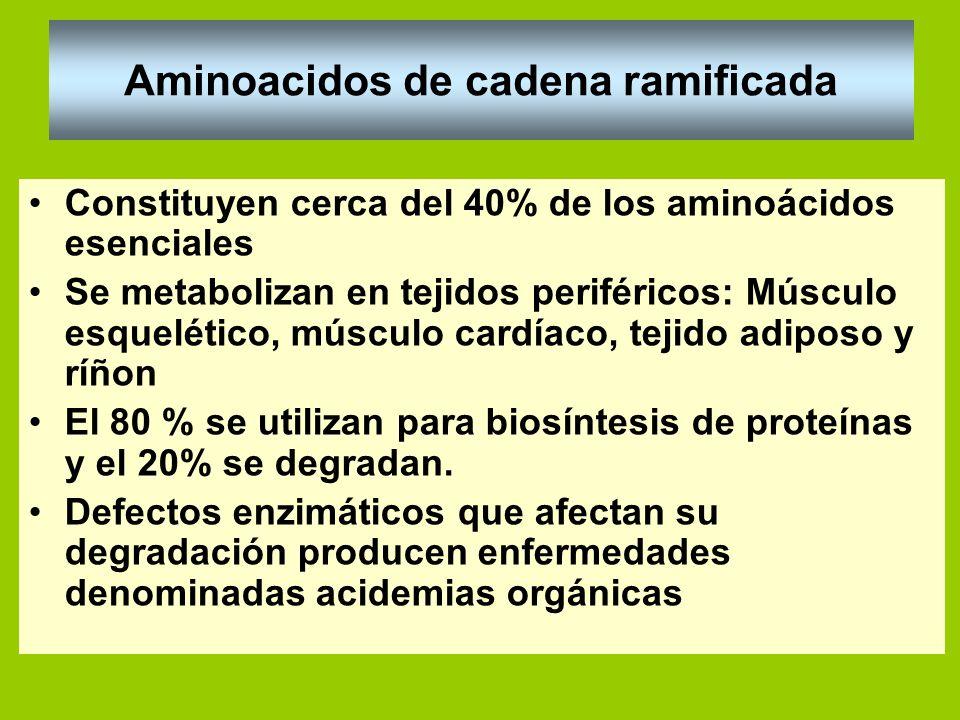 Aminoacidos de cadena ramificada