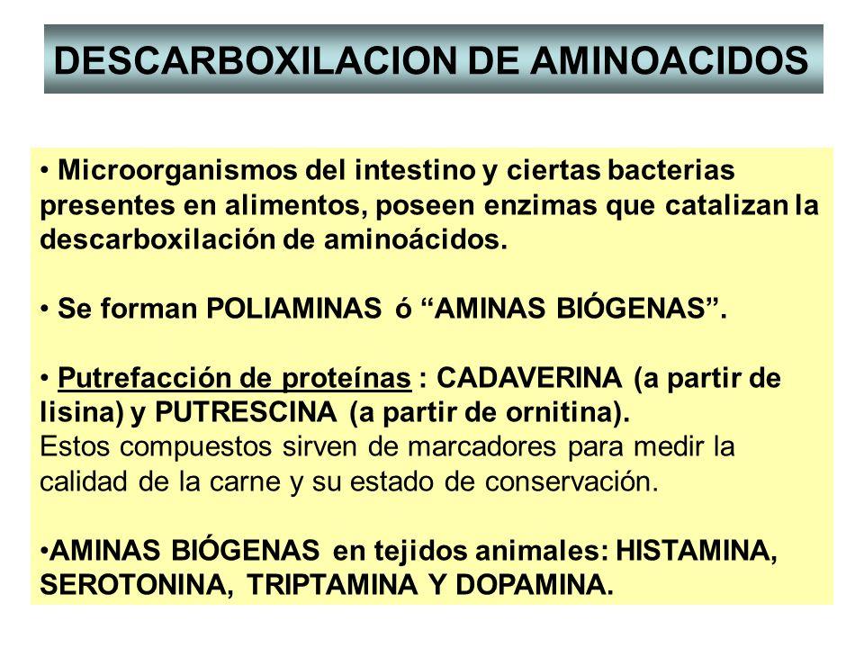 DESCARBOXILACION DE AMINOACIDOS