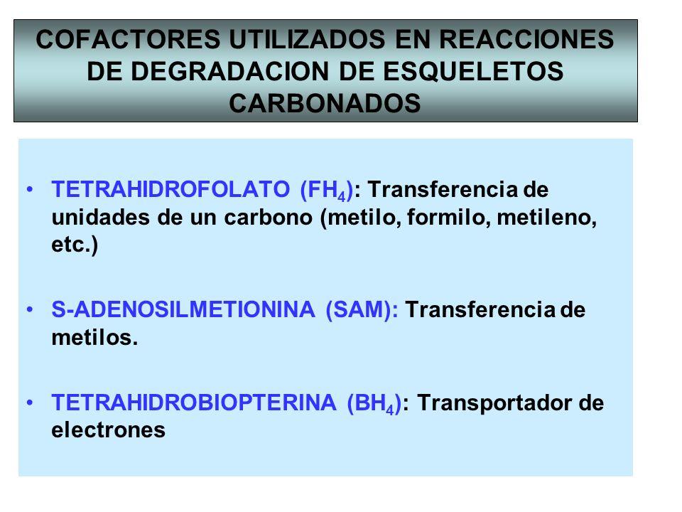 COFACTORES UTILIZADOS EN REACCIONES DE DEGRADACION DE ESQUELETOS CARBONADOS