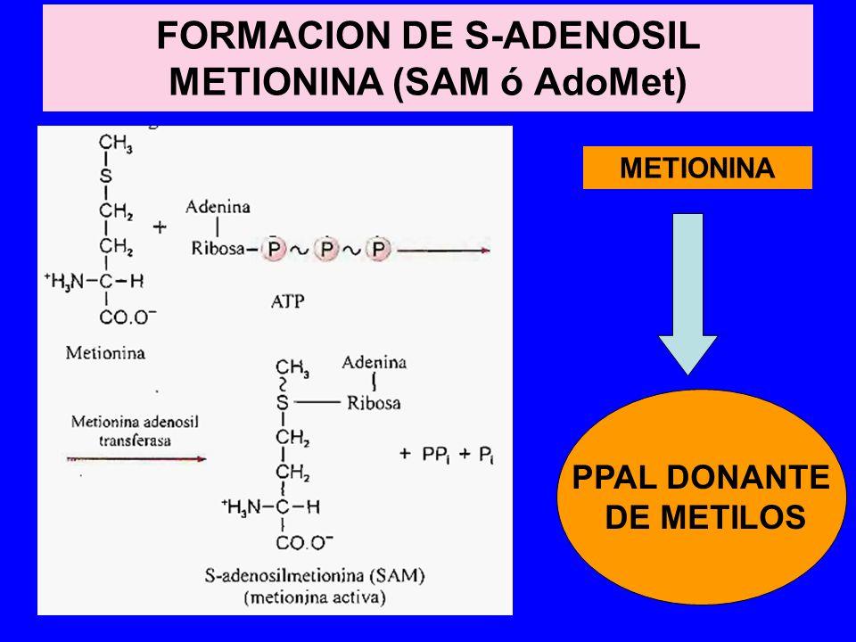 FORMACION DE S-ADENOSIL METIONINA (SAM ó AdoMet)