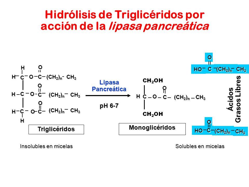 Hidrólisis de Triglicéridos por acción de la lipasa pancreática