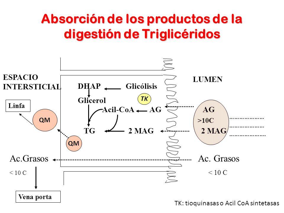 Absorción de los productos de la digestión de Triglicéridos