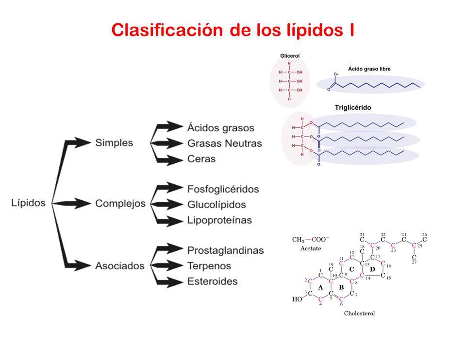 Clasificación de los lípidos I
