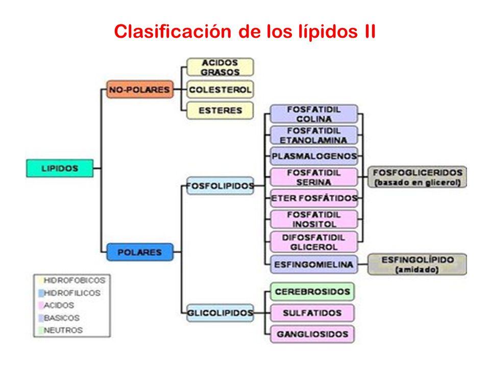 Clasificación de los lípidos II