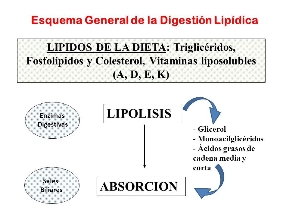 Esquema General de la Digestión Lipídica