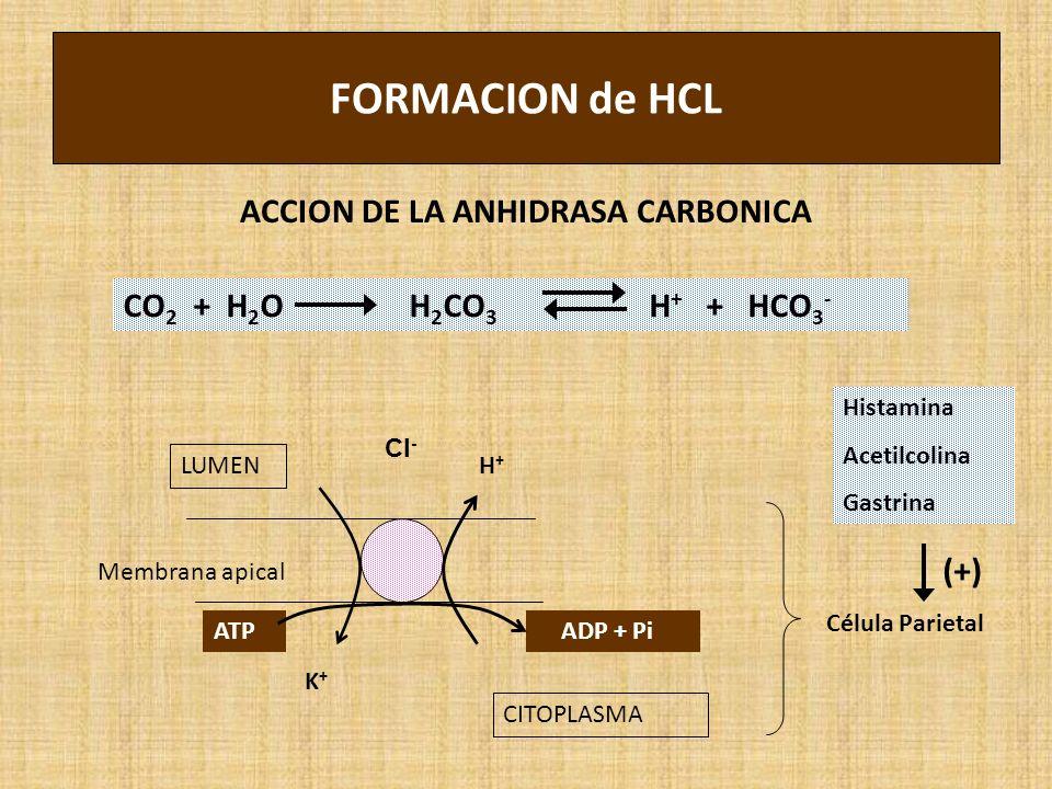 ACCION DE LA ANHIDRASA CARBONICA