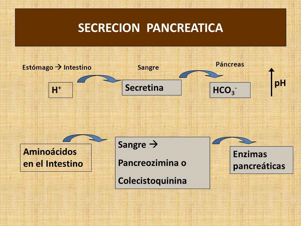 SECRECION PANCREATICA