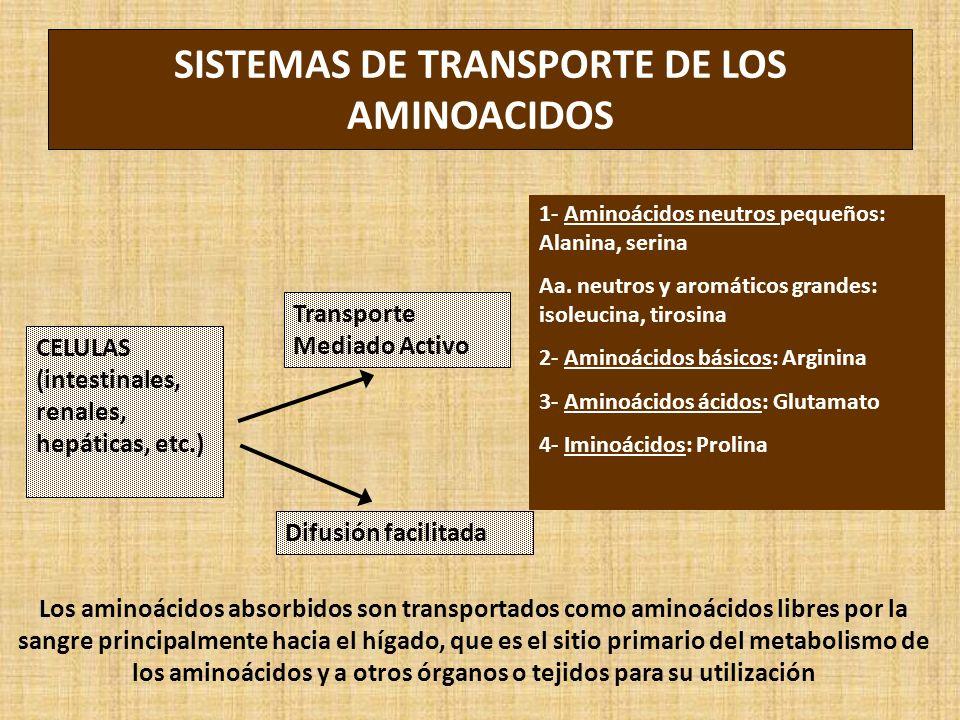 SISTEMAS DE TRANSPORTE DE LOS AMINOACIDOS